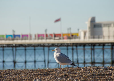 seagull-by-worthing-pier